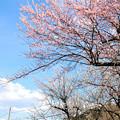 Photos: E353系特急 空と花のコントラスト