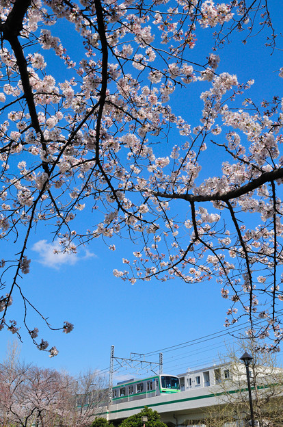 春が始まる