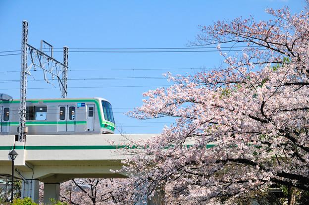 青空と桜のコントラスト