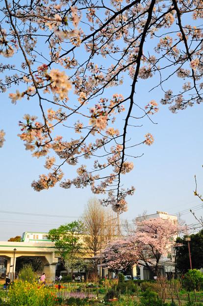 春の夕日を浴びて