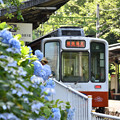あじさいの咲く駅