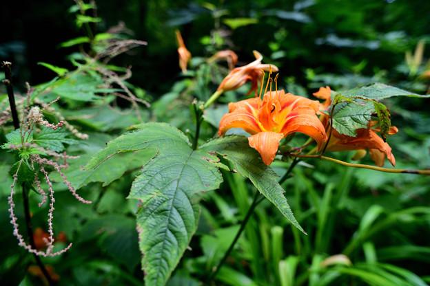 森の咲く花