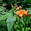 Photos: 森の咲く花