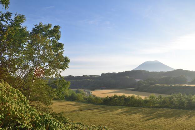 羊蹄山が見える丘