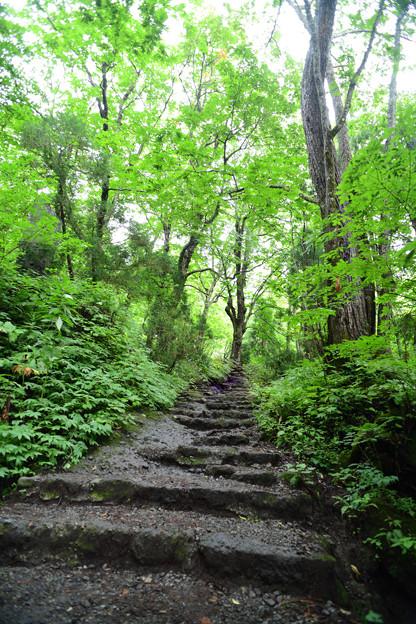 戸隠奥社への階段