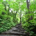 Photos: 戸隠奥社への階段
