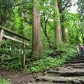 Photos: 戸隠奥社への道