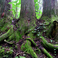 Photos: 三本の木