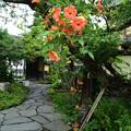 小布施の酒蔵裏庭