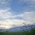 Photos: 秋風吹き渡る