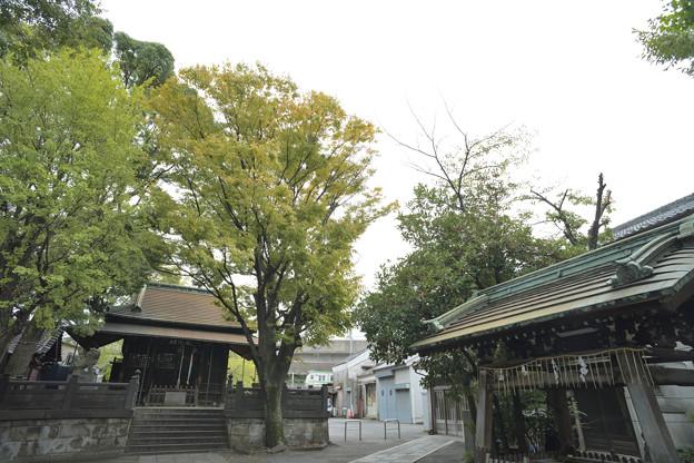 千住 氷川神社