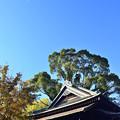 Photos: DSC_4238_00001