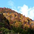 Photos: 紅葉を切り取る