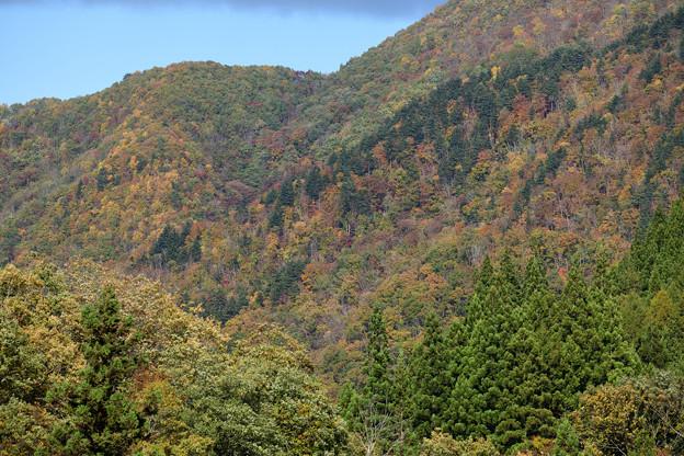紅葉する山