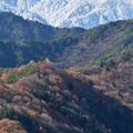 Photos: 新雪と紅葉のグラデーション