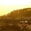Photos: ススキのなびく高原電車