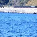 Photos: リゾート21 黒船