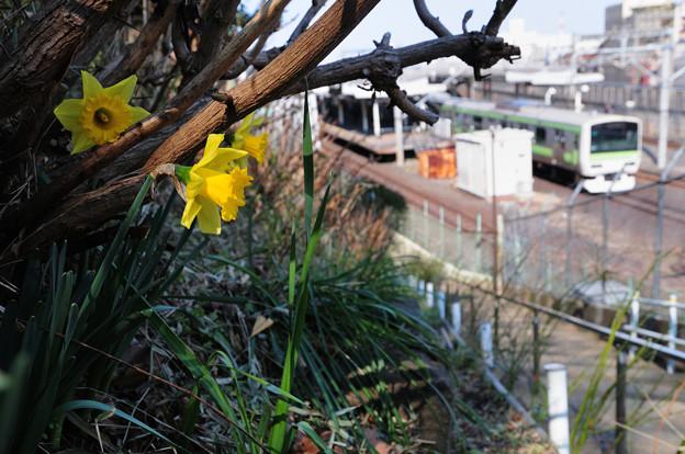 黄色い花咲く早春絵