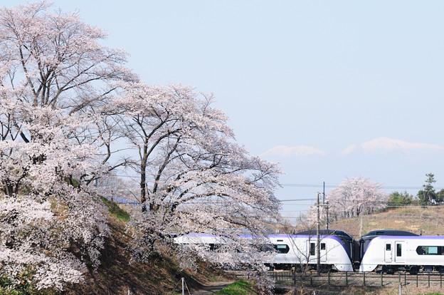 勝沼 甚六桜とE353系特急あずさ号