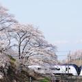 Photos: 勝沼 甚六桜とE353系特急あずさ号