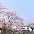 Photos: 勝沼甚六桜とE353系特急あずさ号