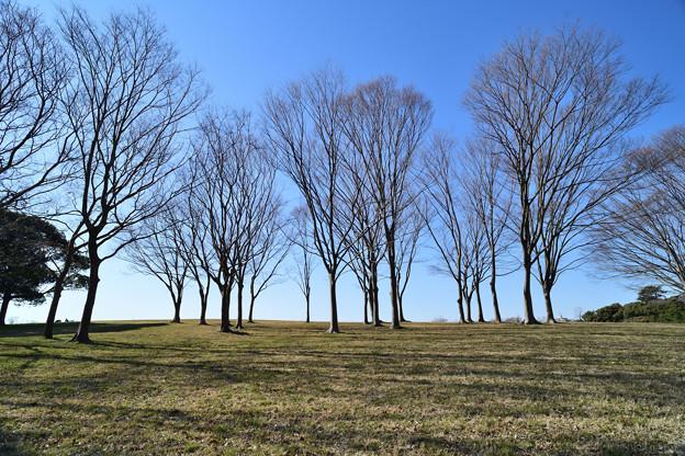 坊主の木たち