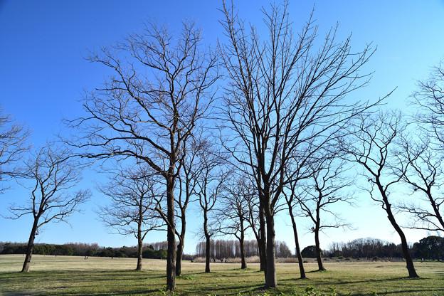 枝の向こうに青空が見える
