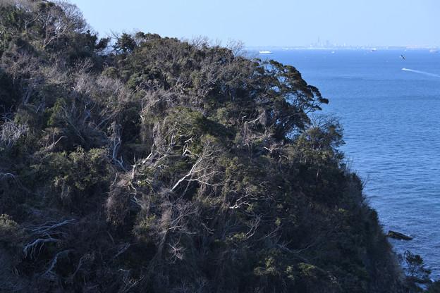 海に迫る森