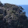 Photos: 海に迫る森