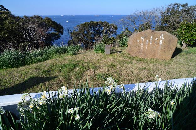 歌碑と水仙の花