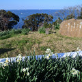 Photos: 歌碑と水仙の花
