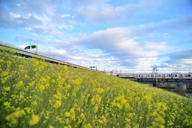 Photos: 菜の花と京成電車