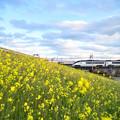 Photos: 菜の花とスカイライナー