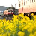 海士有木駅朝の交換風景