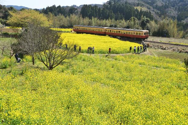Photos: 石神の菜の花畑