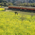 Photos: 石神菜の花畑