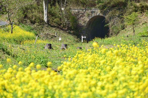 トンネルの出口でトロッコ列車を待っていたが運休だった