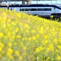 菜の花とスカイライナー