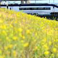 菜の花スカイライナー