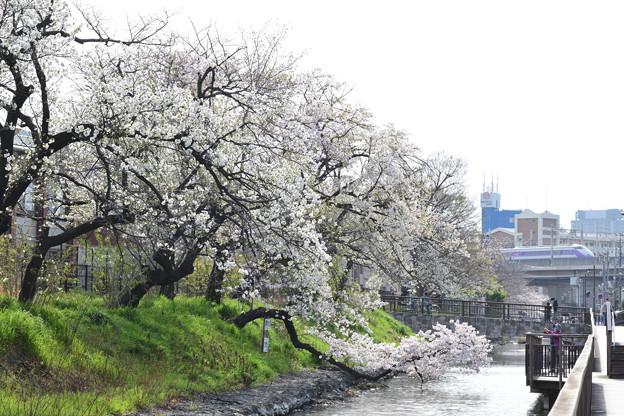 Photos: 桜とスペーシア