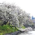 桜とスペーシア