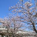 Photos: 桜と東京メトロ千代田線