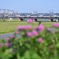 紫色の花の向こうに見える鉄橋