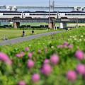 春の鉄橋を渡る京成スカイライナー