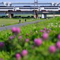 花の咲く堤防をと京成スカイライナー