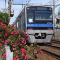 薔薇と北総線7500形電車