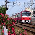 薔薇と京急1000形電車