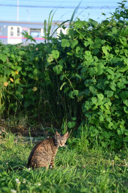 荒川河川敷の野良猫