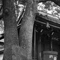 Photos: 社殿と三管塚