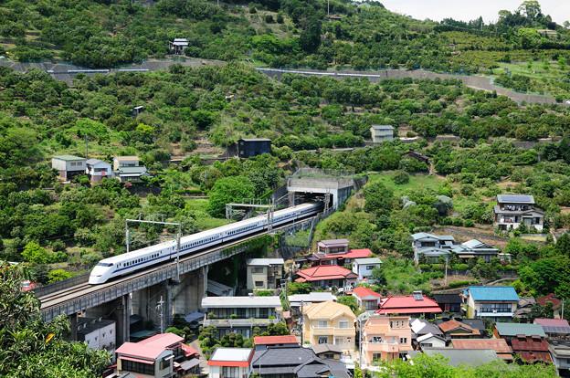 みかん山を行く300系新幹線